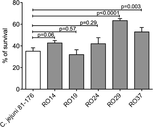 Bile resistance. The ability of C. jejuni chicken isolates (RO14, RO19, RO24, RO29, RO37) and C. jejuni 81-176 to survive to bile salts in Mueller Hinton medium was studied. Following agar growth bacteria were transferred into 50 mL of medium containing 0.5% bile salts. Samples were removed after 24 h and diluted prior plating. The surviving cells were counted after 42 h incubation. The experiments were done in triplicates and Student t test was used for statistical significance.