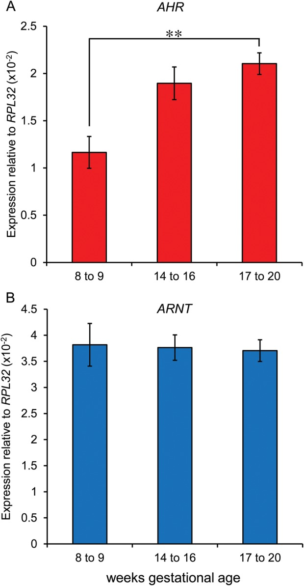 Expression of the aryl hydrocarbon receptor AHR ( A ) increases with gestation ( P = 0.008), but ARNT (aryl hydrocarbon translocator, an AhR co-factor) ( B ) was unchanged ( n = 5–6 ovaries per group).