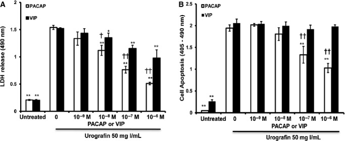 Reduction in contrast-induced renal tubule epithelial cell death by PACAP. (A) Incubation of HK-2 cells with <t>Urografin</t> caused a large increase in the release of <t>LDH</t> into the culture medium. PACAP38 and VIP inhibited the increased release of LDH in a dose-dependent manner. PACAP38 was more potent than VIP. (B) Incubation of HK-2 cells with Urografin caused a very large increase in apoptosis. PACAP38 inhibited the increased apoptosis of HK-2 cells in a dose-dependent manner. * P