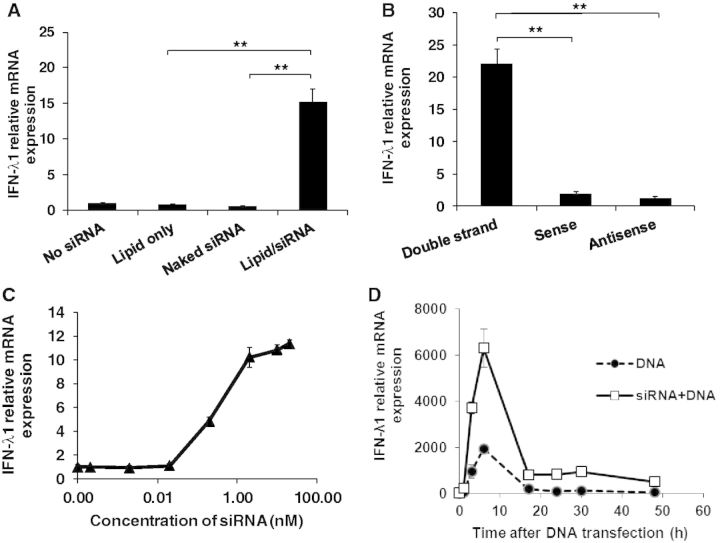 Characterization of siRNA-induced IFN-λ1 production. ( A ) HeLa cells were transfected with a transfection lipid reagent Lipofectamine RNAiMAX, naked siRNA or siRNA with the lipid, followed by IFN-α treatment and DNA transfection on day 2 and day 3, respectively. ( B ) HeLa cells were transfected with double-stranded siRNA, sense or antisense single-stranded siRNA at 10 nM, followed by IFN-α treatment and DNA transfection. ( C ) HeLa cells were transfected with various concentrations of Non-human Ctrl siRNA (0.0001–100 nM), followed by 1000 U/ml IFN-α treatment and 1 µg of DNA transfection as described above. For experiments (A), (B) and (C), total RNA was extracted for relative mRNA expression measurements using real-time RT-PCR. The gene expression level was compared with the cells treated with IFN-α and DNA but not siRNA. ( D ) HeLa cells were transfected with or without Non-human Ctrl siRNA, followed by IFN-α treatment and DNA transfection. Total RNA was extracted at different time points after plasmid DNA transfection. Gene expression was compared with untreated cells at time zero. ** P