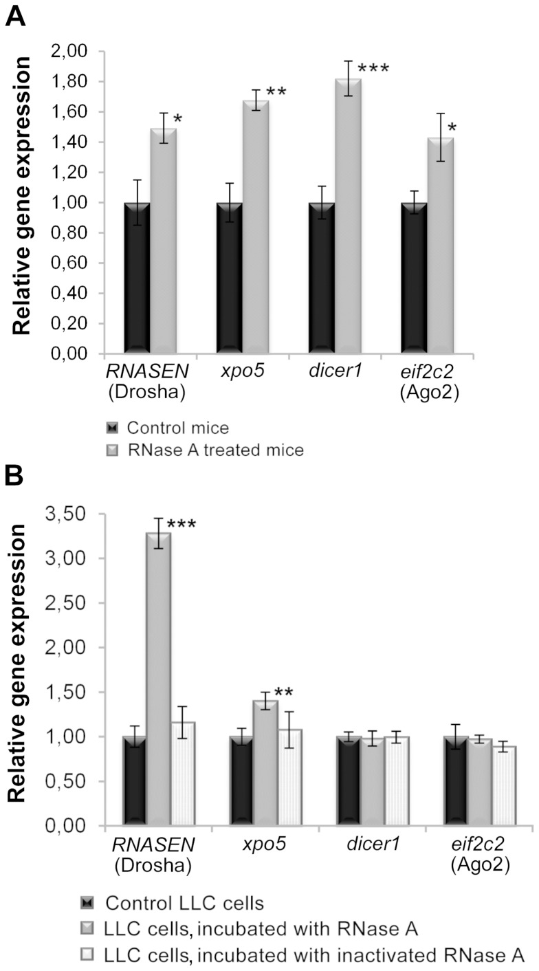 qPCR analysis of the expression of miRNA processing genes. A . Expression of miRNA processing genes in LLC tumour tissue from mice that received RNase A therapy. B . Expression of miRNA processing genes in LLC cells incubated in vitro with intact and DEPC-inactivated RNase A for 48 h. *, **, and *** denote a statistically significant difference relative to the control with p