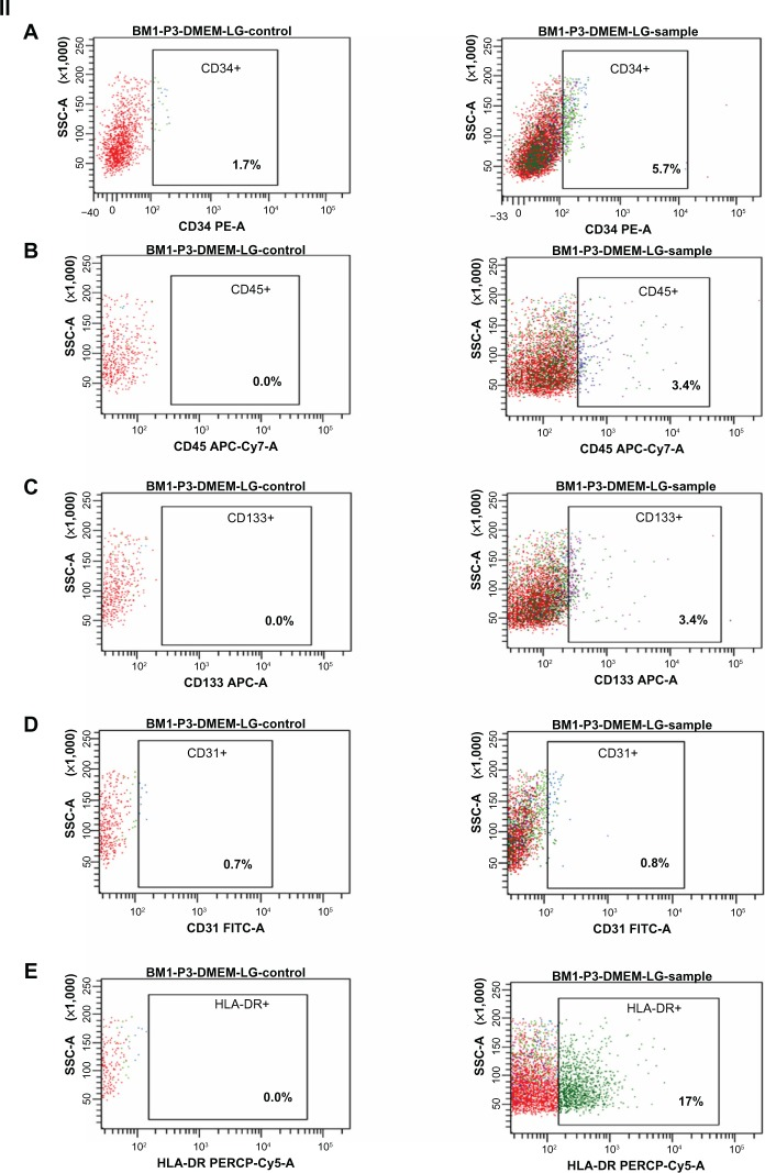 Immunophenotyping of cell surface markers of hBMSCs using flow cytometric analysis. ( I ) Positive markers for mesenchymal stem cells: ( A ) CD90-PERCP, ( B ) CD105-APC, ( C ) CD73-PE, ( D ) CD44-FITC, ( E ) CD29-PE, showing higher percentage expression (control and sample as labeled). ( II ) Negative markers for mesenchymal stem cells: ( A ) CD34-PE, ( B ) CD45-APC-Cy7, ( C ) CD133-APC-A, ( D ) CD31-FITC, ( E ) HLA-DR-PERCP show a low percentage expression (control and sample as labeled). Note: The surface marker profile shows that the cells obtained at third passage were mesenchymal stem cells. BM1-P3-DMEM-LG represents bone marrow cells obtained at third passage in DMEM-LG medium. Abbreviations: DMEM-LG, Dulbecco's Minimum Essential Medium-Low Glucose; hBMSCs, human bone marrow-derived mesenchymal stem cells; SSC, side scatter; BM, bone marrow.