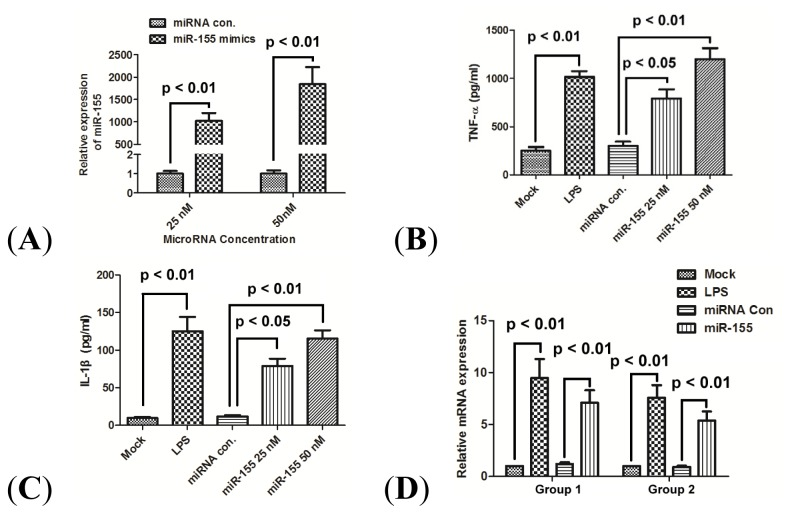 miR-155 promotes production of TNF-α and IL-1β in human PBMCs. ( A ) Fold changes of miR-155 expression were determined by <t>qRT-PCR</t> after the transfection of miR-control, or miR-155 mimics at 25 or 50 nM for 24 h; ( B ) and ( C ) Expression of TNF-α and IL-1β in supernatant of PBMCs 24 h post LPS treatment, or 24 h post transfection with 25 nM miR-155 mimics, 50 nM miR-155 mimics or 50 nM <t>miRNA</t> control. Results were expressed as pg/mL by an ELISA test; and ( D ) mRNA expression of TNF-α (group 1) and IL-1β (group 2) in PBMCs 24 h after LPS treatment or 24 h post transfection with 25 nM miR-155 mimics, 50 nM miR-155 mimics or 50 nM miRNA control. All results are the average of three independent experiments. Statistical significance is shown.