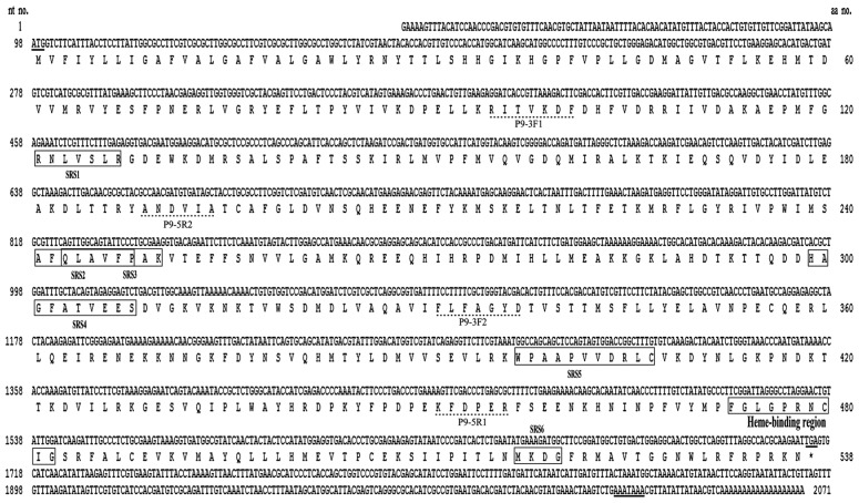 The full-length cDNA sequence of Cydia <t>pomonella</t> CYP9A61 and deduced amino acid sequence. The start codon, stop codon, and polyadenylation signal sequences are underlined. The heme-binding domain and six substrate recognition sites (SRSs) are boxed. Dotted lines indicate the domains on which degenerate primers were designed.