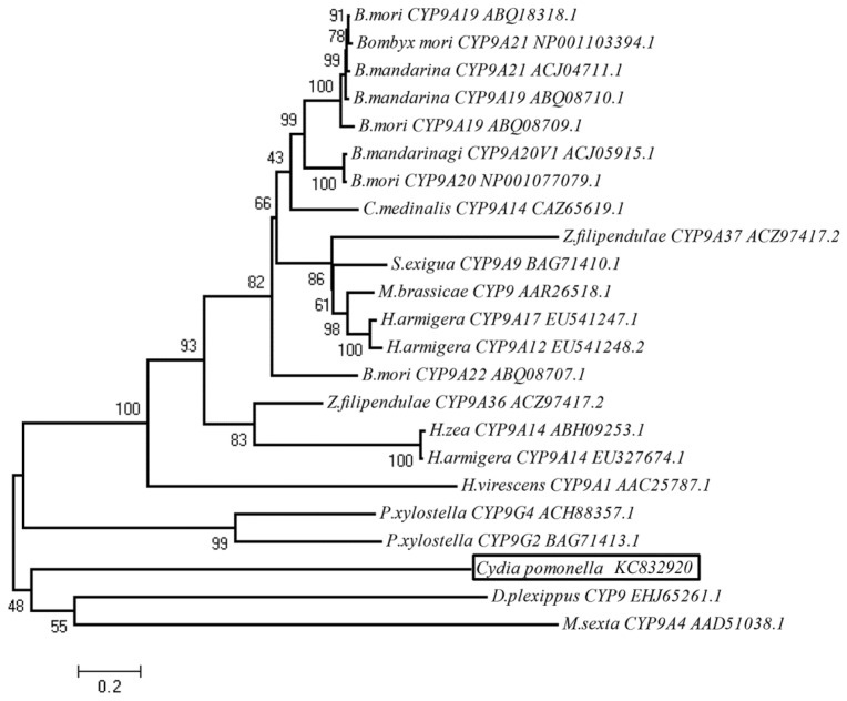 Phylogenetic relationship of C. pomonella CYP9A61 with 22 CYP9s from Lepidoptera. CYP9A61 (GenBank accession number: KC832920) is boxed. This un-rooted phylogenetic tree was constructed using the neighbor-joining method. Nodes indicate bootstrap calculated with 1000 replications support.