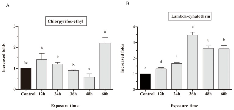 Induction of C. pomonella CYP9A61 . RT-qPCR analysis relative expression of CYP9A61 treated with 12.5 ng chlorpyrifos-ethyl ( A ) and 0.19 ng lambda-cyhalothrin ( B ). Expression level was first normalized to the reference gene beta -actin . The normalized value of each sample was then divided by a specified control (the value of CYP9A61 in acetone treated control), and the ratio was applied to relative expression analysis. The results are shown as the mean ± SE. The error bars show the ranges of standard errors. Letters on the error bars indicate the significant differences by ANOVA analysis ( p