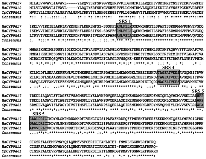 Comparison of C. pomonella CYP9A61 and CYP9A12 (EU541248.2) and CYP9A17 (EU541247.1) from Helicoverpa armigera . SRS1, SRS4 and SRS5 are boxed. Asterisks ( * ) indicate identical residues among three sequences; colons (:) indicate residues with conserved substitutions; dots (.) represent residues with weakly conserved residues in the three sequence alignment.