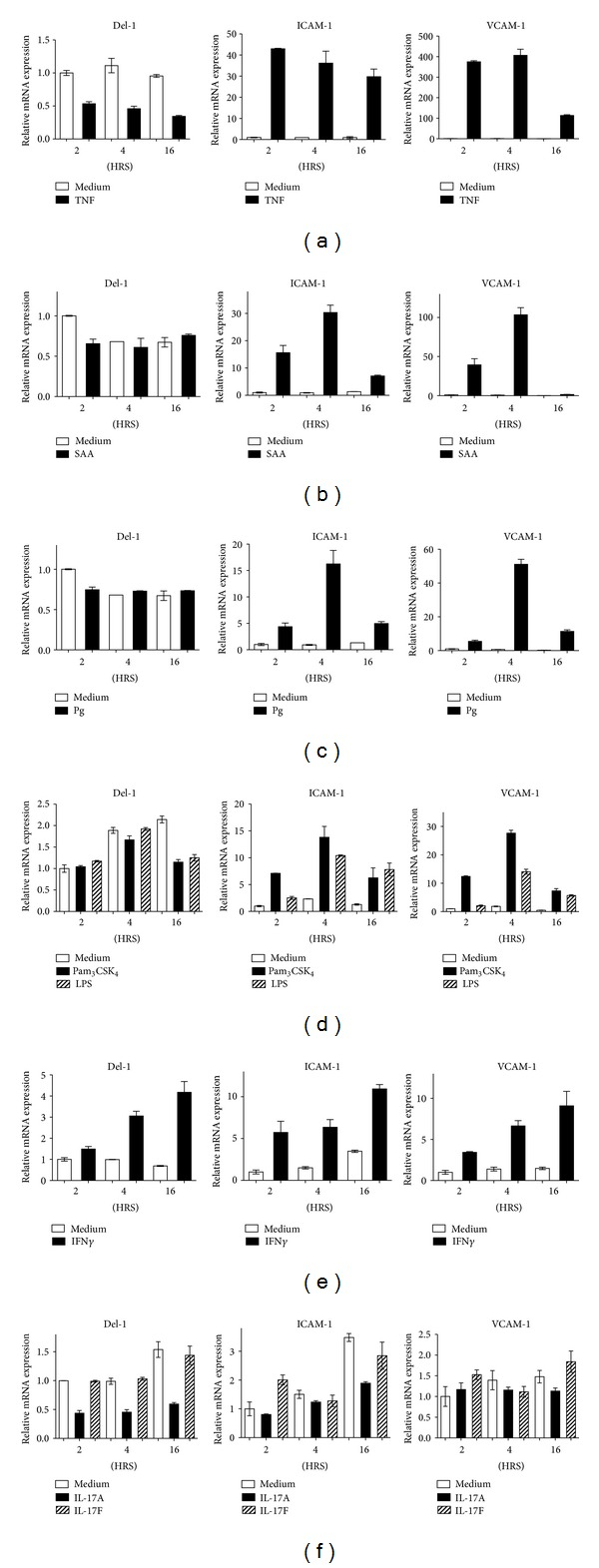 Regulation of Del-1 versus ICAM-1 and VCAM-1 by inflammatory stimuli. HUVEC were cultured for the indicated time intervals with 10 ng/mL TNF (a), 5 μ g/mL serum amyloid A (SAA; (b)), P. gingivalis (Pg; MOI = 10 : 1) (c), Pam 3 CSK 4 or LPS (both at 0.5 μ g/mL; (d)), 10 ng/mL IFN γ (e), or IL-17A or IL-17F (both at 10 ng/mL; (f)) and assayed for Del-1, ICAM-1, and VCAM-1 mRNA expression. Results were normalized to those of GAPDH mRNA and expressed as fold change in transcript levels relative to those of medium-treated cells at 2 hours (HRS), the average value of which was taken as 1. The medium-treated groups in (b) and (c) are the same (SAA and Pg were tested together but were separated in the graphs for enhanced clarity). Data are means ± SD of duplicate determinations from one of three independent sets of experiments that yielded similar results.