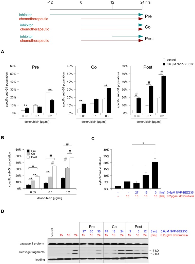 Altered timing affects the potency of NVP-BEZ235/doxorubicin combination therapy in SHEP NB cells. Three different treatment combinations were tested on SHEP NB cells, giving NVP-BEZ235 12 hrs prior to doxorubicin (Pre), giving both substances concurrently (Co), or giving NVP-BEZ235 12 hrs after the chemotherapeutic (Post). Importantly, the maximal incubation time with doxorubicin was kept constant at 24 hrs (earlier time points also shown in C and D). A SHEP NB cells were treated with NVP-BEZ235 and indicated concentrations of doxorubicin for 24 hrs, according to the scheme outlined above. <t>Apoptosis</t> was determined by FACS analysis of the <t>DNA</t> fragmentation of propidium iodide-stained nuclei, and percentage of specific DNA fragmentation is shown. B An alternative depiction of the data presented in A, highlighting the difference between the three NVP-BEZ235/doxorubicin combinations. For all following experiments 0.2 µg/ml doxorubicin was used. C Cells were either left untreated or treated as indicated and mitochondrial release of immunofluorescent-labeled cytochrome c was determined by FACS analysis. D Cells were either left untreated or treated as indicated. A Western blot analysis of caspase-3 processing served as surrogate read-out of caspase activation (appearance of the ∼12 kD cleavage fragment), β-actin was used as loading control. In A and B mean+s.e.m. values of three independent experiments carried out in triplicate, in C mean+s.d. of three independent experiments are shown, while in D a representative result of three independent experiments is depicted. Statistical analysis was carried out by two-sided Student's t -test; * P-value