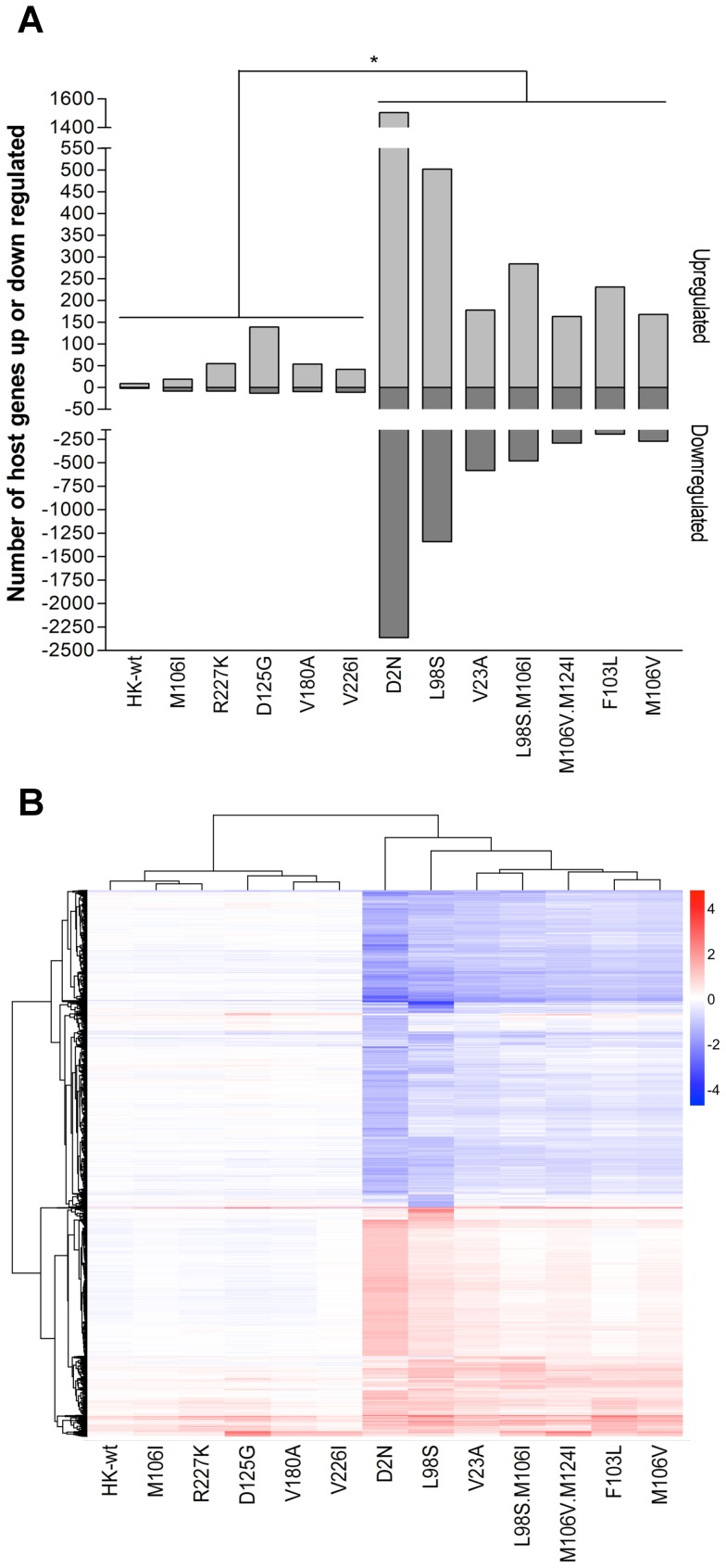 """Mouse-adaptive NS1 mutations regulate mouse gene expression by two different mechanisms. Mouse M1 cells were infected in triplicate at an MOI of 2 with rHK NS mutants or HK-wt virus, and total RNA isolated at 8 hpi was analyzed by microarray using <t>GeneChip</t> Mouse Exon 1.0 ST Array (Affymetrix, Santa Clara, CA, USA). Microarray gene expression data were normalized and analyzed by Flexarray 1.6.1. Genes were considered as up or down regulated relative to mock infected cells if they were ≤1 or ≥1 log2 fold different (≤ or ≥2 fold differences) expression level (p≤0.05; ANOVA). (A) The number of differentially regulated host genes that were significantly up or down regulated ≤2 or ≥2 fold at the p≤0.05 by ANOVA is plotted for each mutant. The mutants formed two groups with either """"low gene regulation"""" (LGR) or """"high t gene regulation"""" (HGR) phenotypes. (B) Heat map of differentially regulated genes in mouse cells infected with HK-wt or rHK NS1 mutant viruses relative to mock infected M1 cells. Genes (total = 5274) were included for hierarchical clustering analysis among mutants if they were differentially regulated (≤2 −1 or ≥2 1 fold differences) and significantly different from mock infected cells for one or more of the mutants, and gene regulation signatures were also analyzed for hierarchical clustering among viruses. The scale depicts up (red) and down (blue) regulated genes according to the log2 scale shown; equal expression is indicated in white (log 2 0 = 1)."""