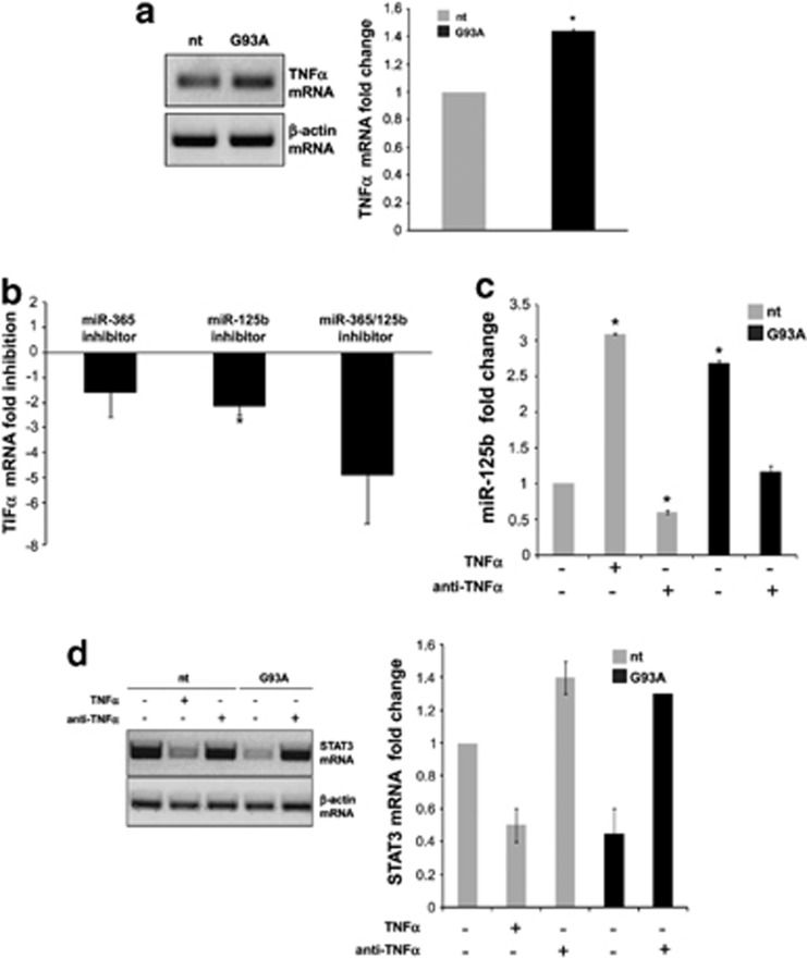 TNF α -mediated miR-125b upregulation and STAT3 repression in microglia. ( a ) Semiquantitative RT-PCR performed using specific primers for mouse TNF α and β -actin mRNAs on nt and SOD1-G93A microglia total RNA. β -actin was used for normalization. ( b ) QPCR quantification of TNF α mRNA was performed at 48 h after transfection with the specified miRNA inhibitors. ( c ) QPCR quantification of miR-125b and ( d ) semiquantitative RT-PCR of STAT3 mRNA in nt and SOD1-G93A microglia upon 24 h of TNF α (10 ng/ml) or anti-TNF α (0.5 ng/ml) treatment