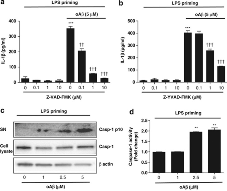 oA β induces IL-1 β secretion/release via caspase-1 activation. LPS-primed microglia were treated with <t>Z-VAD-FMK</t> ( a ) or <t>Z-YVAD-FMK</t> ( b ) for 30 min before oA β stimulation, and IL-1 β in the culture supernatant was measured at 48 h. Data indicate means±S.D. for four independent experiments. *** P