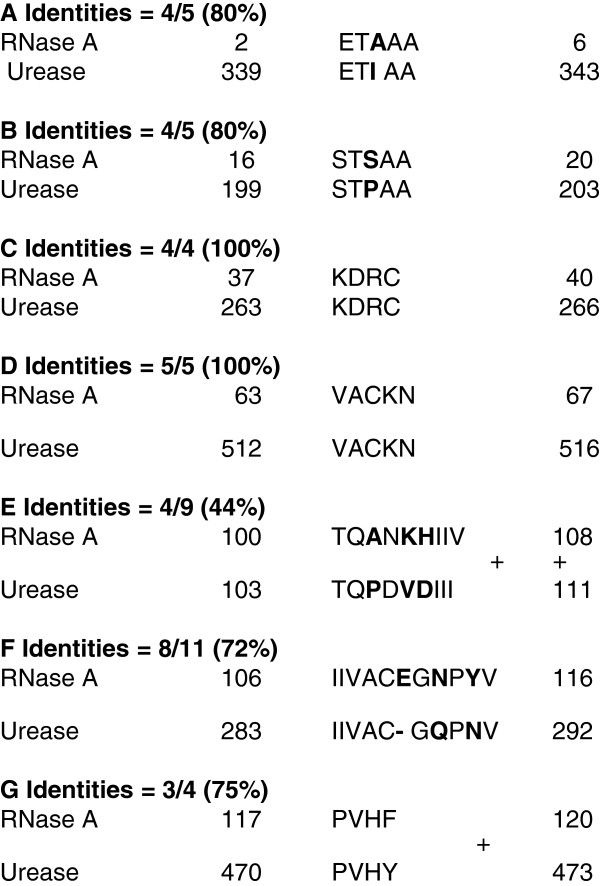 Alignment BLAST/NCBI: Search results for short, nearly exact matches of bovine pancreatic RNase A (13,473 Da; total 124 amino acid residues) and urease (total 567 amino acid residues) from Psychrobacter cryohalolentis K5. A . Identities = 4/5 (80%); B . Identities = 4/5 (80%); C . Identities = 4/4 (100%); D . Identities = 5/5 (100%); E . Identities = 4/9 (44%); F . Identities = 8/11 (72%); G . Identities = 3/4 (75%).