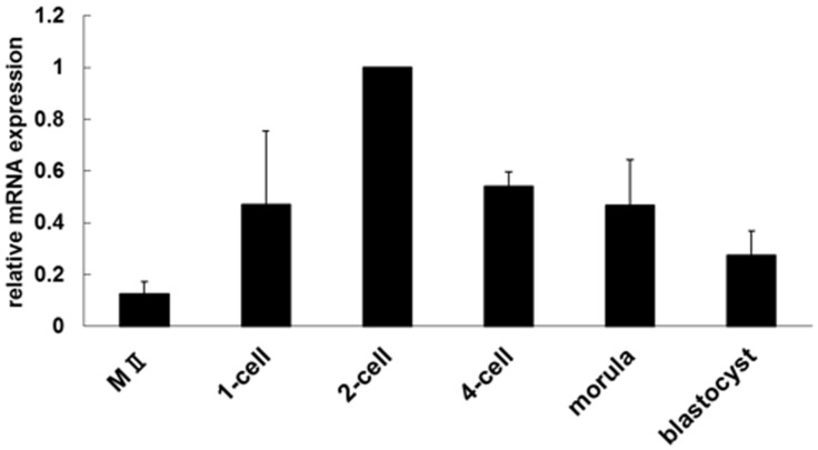 Expression of Tktl1 mRNA during preimplantation development. The expression of Tktl1 in MII stage oocytes and preimplantation embryos was assessed by semi-quantitative RT-PCR. Embryos were collected at the following time points after insemination: one-cell stage, 13 h; two-cell stage, 28 h; 4-cell stage, 45 h; morula, 60 h; and blastocyst, 96 h. The experiments were performed four times and the data are presented as means ± SEM. The value for two-cell-stage embryos was set to 1.0 and relative values were calculated for the other stages.