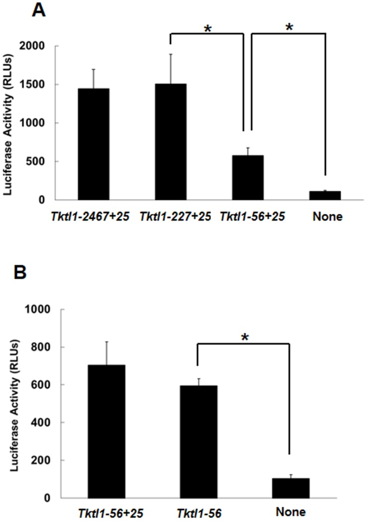 Transcriptional activity of Tktl1 -promoter deletion mutants in one-cell-stage embryos. (A) The upstream region of the Tktl1 promoter ( Tktl1-2467+25 ) was deleted to leave 227 bp ( Tktl1-227+25 ) and 56 bp ( Tktl1-56+25 ), and transcriptional activity was then evaluated. (B) The 25 bp downstream of the TSS was deleted from p Tktl1-56+25 and transcriptional activity was measured. Plasmids (500 ng/µl) were microinjected into the male pronuclei of one-cell-stage embryos. The experiments were performed at least 11 times and the results are presented as means ± SEM. Asterisks indicate significant differences (Student's t -test; P