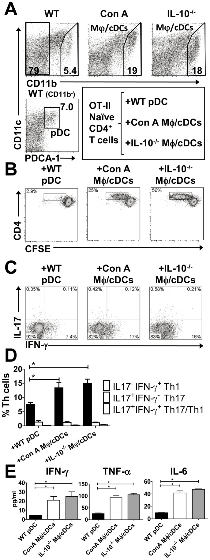 Hepatic Mφ/cDCs cells under colitic conditions induce a Th1 inflammatory response. ( A ) FACS analysis of PDCA-1 + CD11b − CD11c int pDCs from the livers of WT (left column) mice. We also analyzed CD11b + CD11c − Mφs from the livers of ConA-treated (middle) and IL-10 −/− (right) mice, respectively. Dead cells were excluded with 7AAD staining. ( B ) Proliferation of naïve CFSE-labeled splenic CD4 + T cells from OT-II mice, and co-cultured WT pDCs, ConA Mφs, or IL-10 −/− Mφs in the presence of OVA. Dead cells were excluded with 7AAD staining and CD4 + T cells gated on CD3 + CD4 + cells are shown (B and C). Data are representative of three independent experiments. ( C ) Intracellular IFN-γ and IL-17A expression in CD4 + T cells co-cultured with WT pDCs, ConA Mφs, or IL-10 −/− Mφs in the presence of OVA. Data are representative of three independent experiments. ( D ) Proportion of IFN-γ + IL-17A − , IFN-γ − IL-17A + , and IFN-γ + IL-17A + cells among the Th cell population. ( E ) Cytokine concentrations in the culture supernatant of OT-II CD4 + T cells that were co-cultured with WT pDCs or ConA Mφs. Data are representative of three independent experiments. Each experiment was performed using duplicate samples. * P