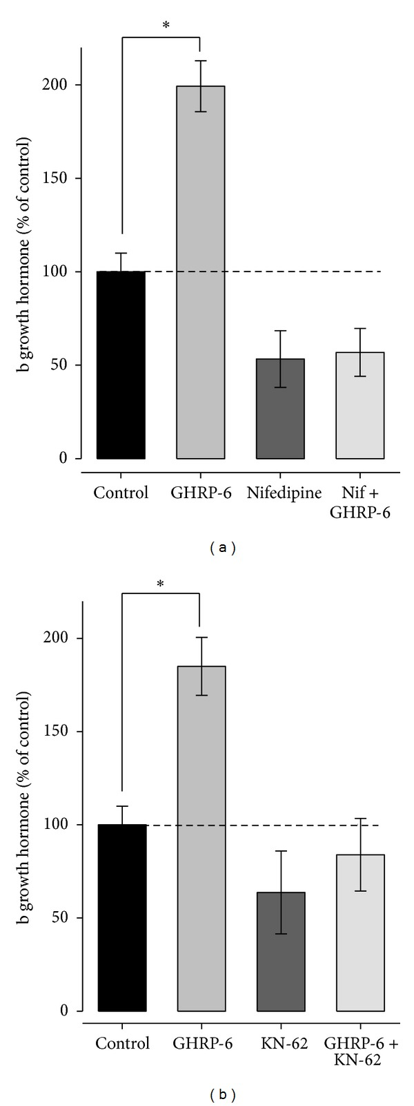 High voltage activation calcium channels' L-type regulation and pathway signaling Ca 2+ /CaM-K II affect GH release in bovine somatotropes. (a) Bar graph illustrating the regulation of hormone release by GHRP-6 (100 nM) applied alone or in the presence of <t>nifedipine</t> (0.5 μ M) a blocker of HVACC L-type. (b) Average amount of GH released in the absences (control) and after treatment with the signaling pathway Ca 2+ /CaM-K II inhibitor KN-62 (10 μ M) alone or in combination with GHRP-6 (100 nM). Each value represents the mean ± SE of determinations performed in triplicate from three independent experiments. The asterisks denote significant differences ( P