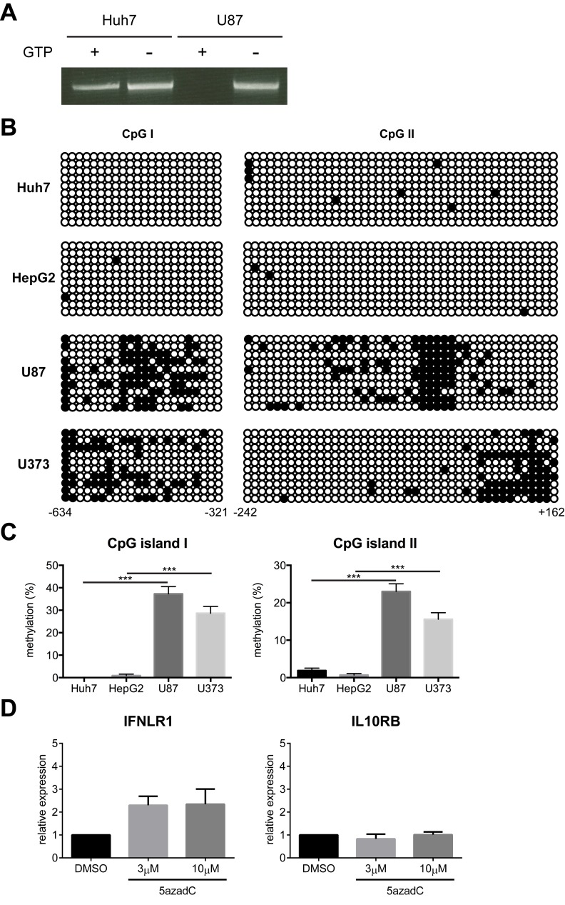 IFNLR1 promoter methylation negatively correlates with IFN-λ responsiveness. (A) Huh7 and U87 genomic DNA was digested with McrBC in the presence or absence of GTP and used as template for nested PCR with primers specific for the IFNLR1 promoter. (B) Huh7, HepG2, U87, and U373 genomic DNA was subject to bisulfite conversion sequencing. Each circle represents one CpG dinucleotide, with filled circles indicating methylated motifs and open circles nonmethylated motifs. Each row represents an individual clone of the population. Lower numbers indicate relative distance to the TSS. (C) Quantification of the methylation status on both CpG islands in (B). (D) U87 cells were cultured in the presence of vehicle control DMSO, 3 µM, or 10 µM 5azadC for 72 h. IFNLR1 and IL10RB expression was examined by RT-qPCR. In all panels, data represent the mean and standard error of the mean (SEM) of at least three experiments.