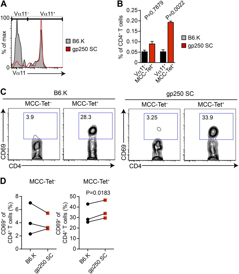 The majority of gp250-selected MCC-specific CD4 + T cells express Vα11 + TCR. ( A and B ) The Vα11 expression of MCC-tetramer + peripheral CD4 + T cells in B6.K or gp250 SC mice. ( B ) n = 6; mean ± SD; two-tailed Mann–Whitney test. ( C and D ) The CD69 upregulation of sorted MCC-tetramer − or MCC-tetramer + CD4 + T cells from B6.K or gp250 SC splenocytes. Data are representative of three experiments. ( D ): n = 3, paired t tests. DOI: http://dx.doi.org/10.7554/eLife.01457.007