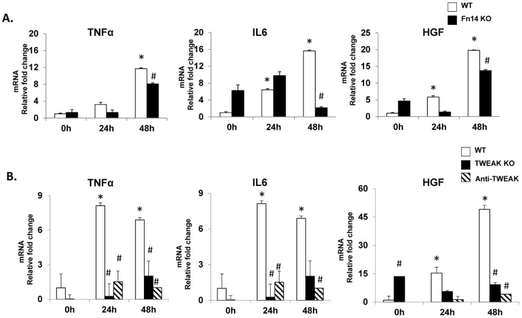 Inhibiting TWEAK/Fn14 signaling attenuates the induction of mitogens associated with liver regeneration. QRT-PCR analysis of whole liver expression of TNFα, IL6 and HGF mRNA in (A) WT and Fn14 KO mice (B) WT, TWEAK KO and WT mice treated with Anti-TWEAK antibodies after PH. Mean +/− SEM results from all mice (n = 3–4/time point) are graphed relative to baseline, pre-PH (time 0) in WT group. * p