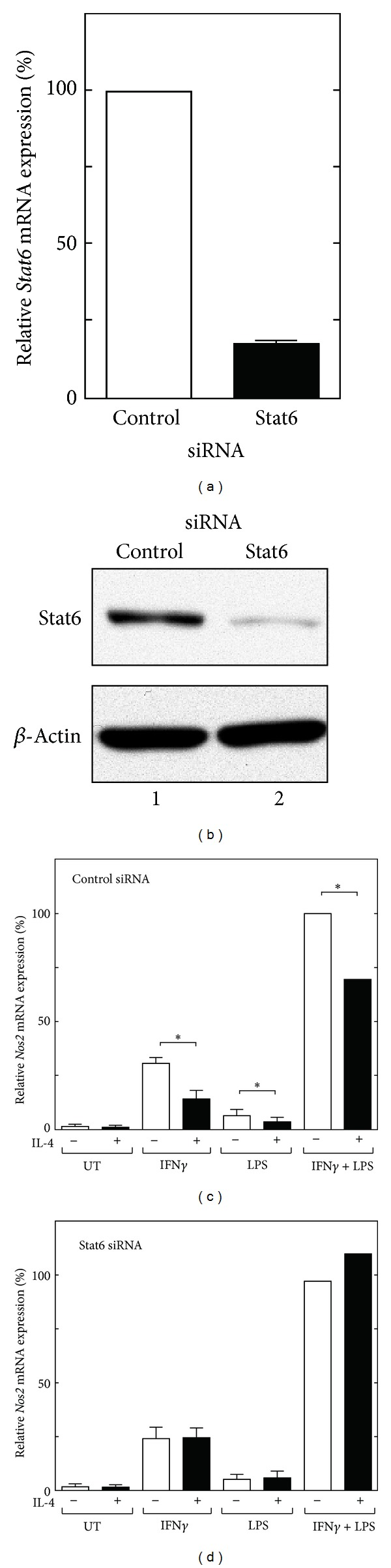 Stat6 is required for the IL-4-mediated inhibition of Nos2 gene expression in RAW264.7 cells. (a) RAW264.7 cells were transfected with control siRNA (100 nM) or Stat6 siRNA (100 nM) for 36 hours; total RNA was then prepared for quantitative real-time RT-PCR. Each column and bar represents the mean ± SEM of three independent experiments. (b) RAW264.7 cells were transfected with siRNA, as described above, and then used to prepare total cellular lysates for a western blot analysis using an anti-Stat6 antibody. (c, d) RAW264.7 cells were transfected with control siRNA (100 nM) or Stat6 siRNA (100 nM). Thirty-six hours after transfection, the cells were either left untreated (UT) or treated with IL-4 (10 ng/mL) for 30 min prior to stimulation with IFN γ (10 ng/mL) and/or LPS (100 ng/mL) for 8 hours before the preparation of total RNA for quantitative real-time RT-PCR. The relative Nos2 mRNA expression levels are shown as percentages of the activity of cells transfected with the control siRNA and stimulated with IFN γ and LPS. Each column and bar represents the mean ± SEM of three independent experiments. The asterisks denote a statistically significant difference compared to the cultures treated with IL-4 ( P