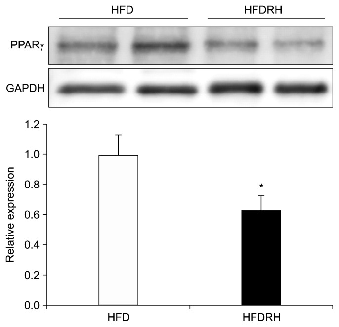 Effect of RHE on PPARγ expression in epididymal fat. Male C57BL/6 J mice were fed HFD or HFDRH for 8 weeks. On the final day, a part of epididymal fat was collected and total protein extracted. The amount of PPARγ was quantified by Western blotting. Protein expression of PPARγ was quantified and normalized against GAPDH. Each column represents mean±SEM and n=5. Significantly different from the HFD-fed group (white column), * P
