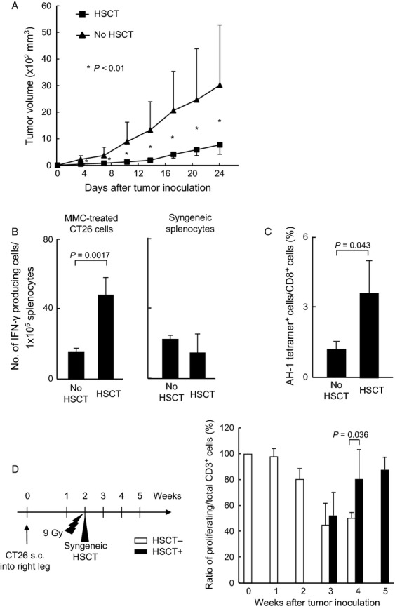 Syngeneic HSCT suppressed the growth of subcutaneous tumors. (A) Growth suppression of subcutaneous tumors in syngeneic HSCT mice. The BALB/c mice received a lethal dose of irradiation, followed by a infusion of BM and splenic T cells derived from BALB/c mice. CT26 cells were inoculated into right legs (number of animals per each group: n = 7). Tumor volumes were measured at the indicated days. (B) The increase of IFN-γ-positive cells in response to stimulation of CT26 cells by an ELISpot assay. Two weeks after HSCT, splenocytes were isolated from HSCT mice, and cocultured with CT26 cells or control lymphocytes ( n = 3). (C) The increase of tumor-specific CD8 + T cells in HSCT mice. The splenocytes were isolated 2 weeks after HSCT, and CT26-specific AH-1-tetramer-positive cells were analyzed by flow cytometry ( n = 4). CD8 + lymphocyte regions in FACS plots were gated and developed spots in two dimensions, and the ratio of tetramer + CD8 + cells per total CD8 + cells was calculated. (D) The increase of proliferating activity of CD3 + cells in HSCT mice. HSCT was performed 2 weeks after tumor inoculation, and the proliferation of CD3 + T cells was analyzed during 3–5 weeks after tumor inoculation (1–3 weeks after HSCT). The splenocytes were isolated and 5 × 10 6 of carboxyfluorescein succinimidyl ester (CSFE)-labeled splenocytes were cultured with CD11c + cells in CD3-coated 24-well plates. After 48 h, the proliferating fraction of CD3 + cells was evaluated with anti-CD3 + antibody (BD Biosciences) by flow cytometry ( n = 3). The proliferating cells were defined as a single or more round of division. HSCT, hematopoietic stem cell transplantation; BM, bone marrow; IFN, interferon; FACS, fluorescence-activated cell sorting.