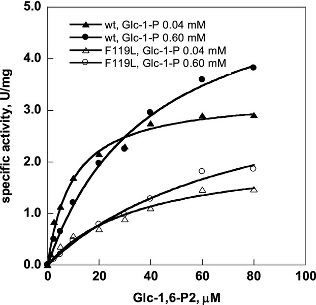 Specific activity of PMM2 depends on glucose-1,6-bisphosphate concentration. The assay was performed at 32°C in a reaction mixture containing HEPES 20 mmol/L, pH 7.5, MgCl 2 5 mmol/L, NaCl 150 mmol/L, NADP+ 0.25 mmol/L, Glu-1-P (0.04 or 0.60 mmol/L), and yeast glucose 6-phosphate dehydrogenase 10 μg/mL, while Glc-1,6-P 2 was changed in the range 0–80 μmol/L. Enzymes concentrations were 107 nmol/L for wt-PMM2 and 73 nmol/L for F119L-PMM2. The hyperbolic dependence of velocity on the activator concentration was fitted using Michaelis and Menten equation to evaluate EC50.