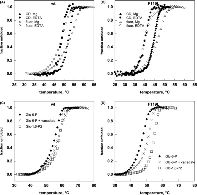 Ligand binding can affect the thermal stability of PMM2. Heat-induced melting profile of wild-type PMM2 (A and C) and F119L-PMM2 (B and D) were recorded by thermal shift assay and by circular dichroism. For thermal shift assay, the proteins (0.2 mg/mL) were equilibrated in buffer (HEPES 20 mmol/L, NaCl 150 mmol/L, pH 7.5) containing Sypro Orange2.5X and the appropriate ligands: MgCl 2 5 mmol/L, EDTA 5 mmol/L, Glc-6-P 0.5 mmol/L + MgCl 2 5 mmol/L, Glc-6-P 0.5 mmol/L + MgCl 2 5 mmol/L + vanadate 0.5 mmol/L, Glu-1,6-P 0.5 mmol/L + MgCl 2 5 mmol/L. The samples were distributed in 96-well <t>PCR</t> plates, the plates were sealed, and heated from 25 to 80° at 0.5°C/min. The experiment was run on an <t>iCycler</t> iQ Real Time PCR Detection System. An excitation wavelength of 490 nm and an emission wavelength of 575 nm were used to collect the data. When the melting profile was obtained by circular dichroism the proteins (0.2 mg/mL) were equilibrated in the same buffer in the presence of MgCl 2 1 mmol/L or EDTA 5 mmol/L. The signal at 222 nm was recorded while temperature was increased at 0.5°C/min from 20°C. The raw data were corrected by taking into account the slopes of the pre- and post-transition baselines, then they were normalized.