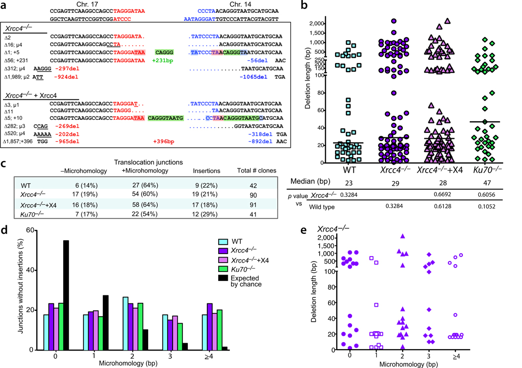 Translocation breakpoint junctions have similar characteristics in wild-type, Xrcc4 −/− mutant and complemented cells, and Ku70 −/− cells. (a) Representative der(17) translocation junction sequences obtained from Xrcc4 −/− and Xrcc4-complemented cells. DNA ends generated by I-SceI on chrs.17 and 14 are indicated in red and blue, respectively. A summary of the various end modifications is presented to the left of each junction in bp: Δ, total deletion; µ, microhomology; +, insertion. Sequences are annotated as follows: del, deletion length from the DNA end; underline, microhomology; +, length of long insertion. The middle green sequences are short insertions from chr. 14; considering a template model for their insertion, the sequences in red shading (TAA) would be microhomology between the DNA ends that could anneal to act as a primer and the blue shading would represent microhomology for annealing after DNA synthesis between the 2 DNA ends (see text). (b) Deletion lengths for der(17) breakpoint junctions. Each value represents the combined deletion from both ends of an individual junction. The median deletion length for each genotype is indicated by a bar on the graph and the value is give below the graph. Deletion lengths do not differ significantly from each other (two-tailed Mann-Whitney test). +X4, transient complementation with Xrcc4. (c) Microhomology and insertion frequencies are similar for the four genotypes. (d) Distribution of microhomology lengths for der(17) breakpoint junctions. Only junctions with simple deletions (i.e., without an insertion) are included. (e) Lack of correlation between deletion length and microhomology use. Only junctions for Xrcc4 −/− cells are plotted.