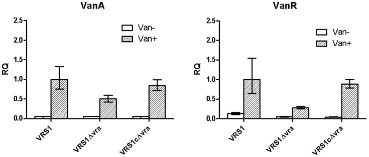 Effect of deletion of vraTSR on vanA and vanR gene induction by vancomycin. Expression of vanA operon genes in wildtype VRSA clinical strain (VRS1), the vraTSR deletion mutant (VRS1Δvra) and the vraTSR -complemented mutant (VRS1cΔvra), as measured by qRT-PCR. Vancomycin was added to early log cultures (when cultures reached an OD 600 of 0.2) to induce vanA expression and RNA was isolated 1 hour later. Expression of each gene target was evaluated using relative quantification (RQ) with the comparative ΔΔCt method using strain VRS1 treated with vancomycin as the reference (after each probe was normalized to an endogenous control). Error bars reflect the range of RQ values from 3 experimental triplicates. The vanA gene probe was labeled with FAM and used in duplex reactions with the 16S rRNA gene probe labeled with fluorophore Cy5 as the endogenous control. A FAM-labled vanR probe was used in a duplex reaction with a gyrB probe labeled with fluorophore Cy5 as the endogenous control. The choice of the endogenous controls were based on compatibility with the target in the duplex reaction.