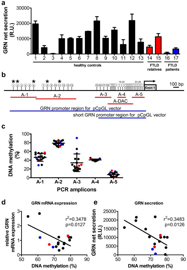GRN expression in human lymphoblast cell lines is inversely correlated to its promoter methylation. ( a ) GRN net secretion was measured by ELISA in LCLs derived from neurologically healthy individuals (LCL #1-13), unaffected relatives of FTLD patients (LCL #14, 15, highlighted in blue) and FTLD-patients (LCL#16, 17, highlighted in red). n = 3, mean ± SEM. ( b ) Scheme of GRN promoter region. Red bars depict PCR-amplicons analyzed for DNA methylation levels by MassARRAY. Blue bars indicate full length and short promoter region that was cloned into the pCpGL vector for luciferase assays (compare Figure 3 ). White circles display CpG units in amplicons A-1 to A-5 and A-DAC quantified by MassARRAY. CpG units that were not analyzed are not shown. Asterisks indicate significant correlation between GRN mRNA expression or GRN secretion and GRN methylation at respective CpG unit (*p