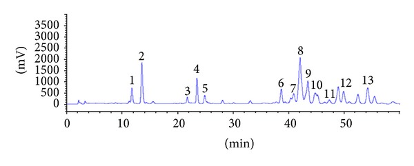 Representative <t>HPLC/ELSD</t> chromatograms of triterpenoid saponins in PGSM. The numbers indicate each triterpenoid saponin: 1, deapi-platycoside E; 2, platycoside E; 3, deapi-platycodin D 3 ; 4, platycodin D 3 ; 5, platyconic acid A; 6, deapi-platycodin D; 7, platycodin D 2 ; 8, platycodin D; 9, polygalacin D; 10, 3′′-O-acetylpolygalacin D; 11, platycodin A. 12, deapio-3′′-acetyl polygalacin D; 13, 2′′-O-acetyl platycodin D.