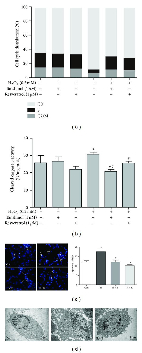 Tanshinol diminishes the cell cycle arrest and apoptosis under oxidative stress. C2C12 cells were pretreated with the indicated concentrations of Tanshinol or Resveratrol for 1 h, followed by the treatment of vehicle control or H 2 O 2 for 24 h. The following measurements were carried out. (a) Analysis of cell cycle distribution was explored using flow cytometry; (b) the activation of caspase 3 was determined by ELISA kit; (c) observations of morphological alterations of apoptosis cells were addressed by Hoechst33258 staining (left panel) and counted by Image J software (right panel); (d) the ultrastructural differences between apoptosis cells and normal cells were examined using TEM. Note: (1) Con (vehicle control); (2) H (H 2 O 2 ); (3) H + T (H 2 O 2 + Tanshinol); (4) H + R (H 2 O 2 + Resveratrol). Error bars indicate mean ± SEM of at least three independent experiments. * P