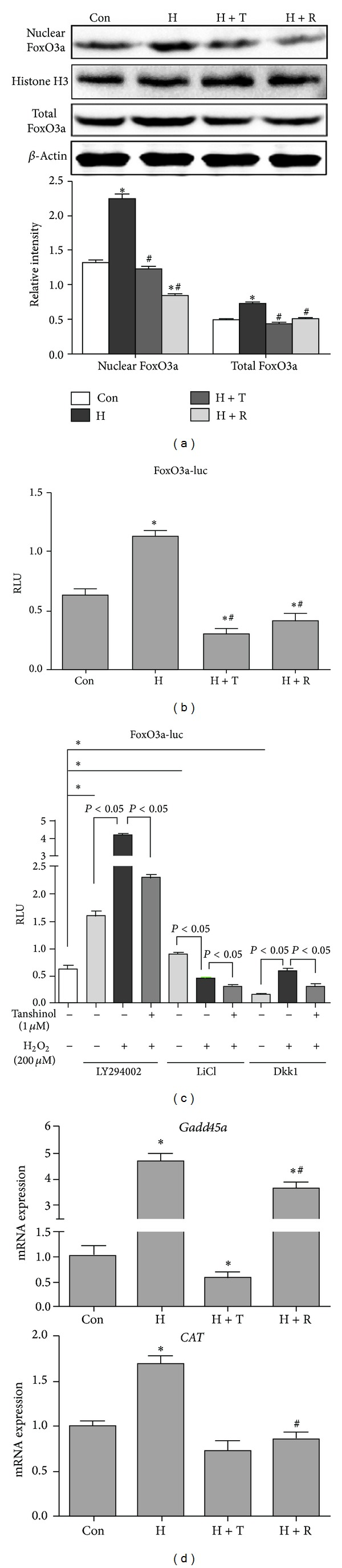 Tanshinol attenuates the activation of FoxO3a in response to oxidative stress. (a) C2C12 cells were treated as described in Figure 4 , and protein expressions from whole cell lysates and nuclear fractions were immunoblotted for FoxO3a, β -actin (whole lysates marker), and Histone H3 (nuclear marker). Representative immunoblots were shown in upper panel. Quantitative analysis of relative band intensities of protein was showed in lower panel. (b and c) Cells were transfected with the FoxO3a-luc reporter plasmid, and the treatment of Wnt3a was replaced with LY294002 (50 μ M), LiCl (10 mM), or Dkk1 (500 ng/mL), and other procedures of experiments were addressed as described in Figure 5(b) . (d) C2C12 cells were treated as described in Figure 4 , and the expression levels of Gadd45 and CAT mRNA were quantified by qRT-PCR and normalized to GADPH mRNA. Note: (1) Con (vehicle control); (2) H (H 2 O 2 ); (3) T (Tanshinol); (4) H + T (H 2 O 2 + Tanshinol); (5) H + R (H 2 O 2 + Resveratrol). Error bars indicate mean ± SEM of at least three independent experiments. * P