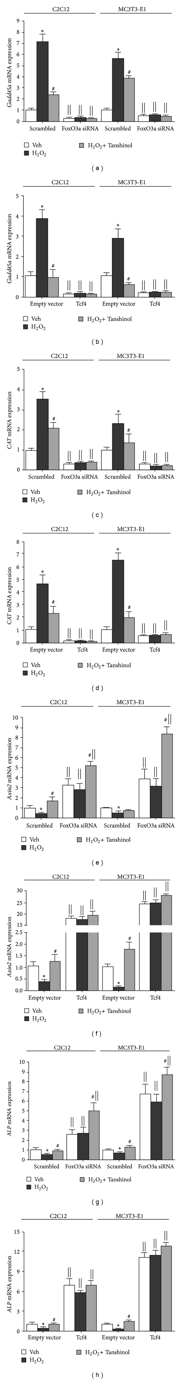 Effects of Tanshinol on targets genes of Wnt/Tcf and FoxO3a in C2C12 cells and MC3T3-E1 cells treated with FoxO3a siRNA, or with Tcf4 overexpression under oxidative stress. ((a), (c), (e), and (g)) C2C12 cells or MC3T3-E1 cells were transfected transiently with either the FoxO3a siRNA or the scrambled RNA control in the presence or absence of vehicle, H 2 O 2 , or Tashinol for 24 hours. The relative mRNA expression levels of Gadd45a , CAT , Axin2 , and ALP genes in control cells (Scrambled) and in the FoxO3a-knockdown (FoxO3a siRNA) cells were assessed by quantitative RT-PCR assay. ((b), (d), (f), and (h)) C2C12 cells or MC3T3-E1 cells were transfected transiently with either the overexpression plasmid of Tcf4 or the empty vector control. The following procedure was executed as described in (a), (c), (e), and (g). mRNA values were normalized to GAPDH mRNA. Bars represent mean ± SME of three independent experiments. * P
