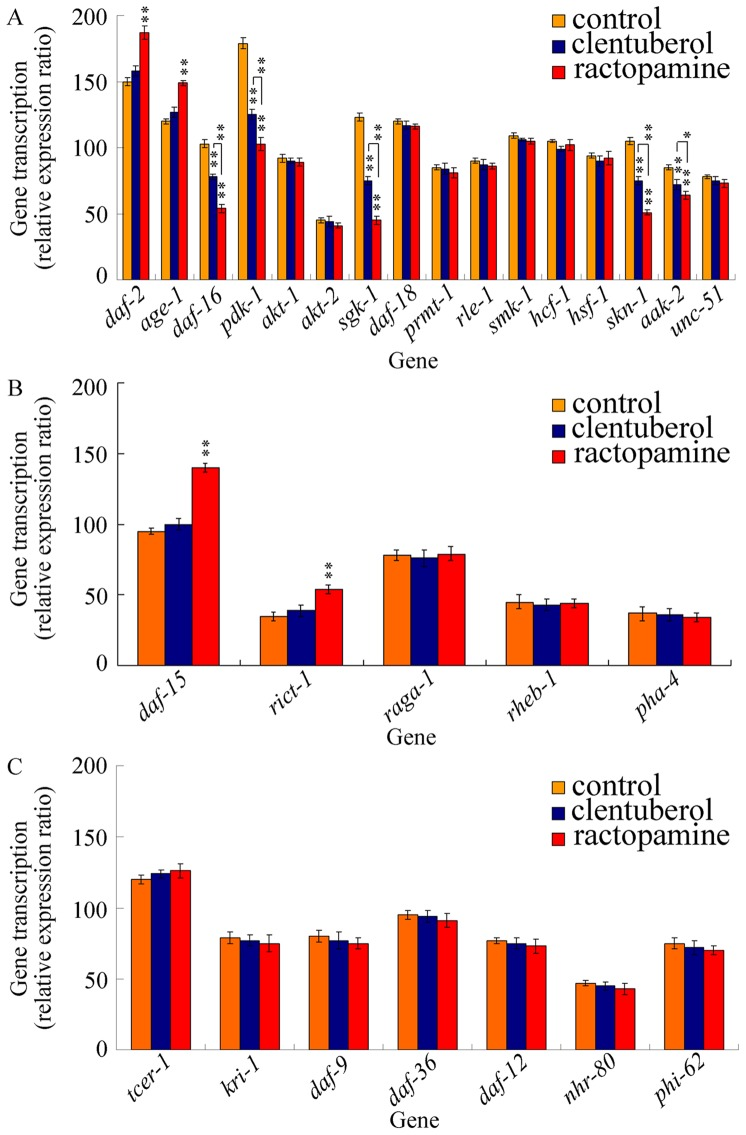Effects of clenbuterol or ractopamine exposure on expression patterns of genes required for aging control. (A) Effects of clenbuterol or ractopamine exposure on expression patterns of genes in insulin/IGF-1 signaling pathway. (B) Effects of clenbuterol or ractopamine exposure on expression patterns of genes in TOR signaling pathway. (C) Effects of clenbuterol or ractopamine exposure on expression patterns of genes in germline signaling pathway. Exposures were performed from L1-larvae to adult (prolonged exposure) at the concentration of 10 µg/L. Bars represent mean ± S.E.M. ** P