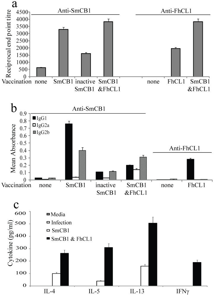 Effects of immunization with SmCB or FhCL without adjuvant on immune responses, assessed 6 days post infection. (a) Titres of peptidase specific IgG were measured in the sera of immunized mice by ELISA. The data shown is representative of 3 independent experiments and displays the inverse of the end point serum dilution. (b) The isotype of peptidase specific antibodies in the sera of mice was determined by ELISA. The data shown is representative of 5 independent experiments. Each column represents the delta mean absorbance ± the standard error around the mean (SD). (c) Spleens were harvested from mice that were infected following immunization with SmCB1 or a combination of SmCB1 and FhCL1. The quantity of cytokine (IL-4, IL-5, IL-13 and IFN-γ) released into culture media by spleen cells stimulated with SmCB1 in vitro was measured by ELISA. Supernatants from cells incubated in media only served as negative controls. Each column represents the mean ± SD.