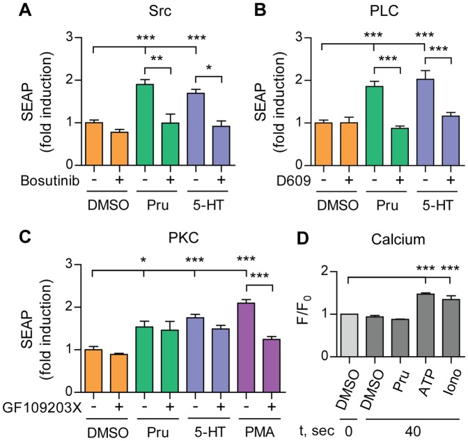 5-HT 4d receptor-stimulated APP shedding requires Src and phospholipase C, but not PKC or calcium. (A), (B) and (C) SH-SY5Y cells, transfected with pEAK12-AP-APP and pcDNA3.1-5-HT 4d , were treated with 1 µM prucalopride or 5-HT (5-HT 4 receptor agonists) and PMA in the absence or presence of 50 µM Bosutinib (Src inhibitor) (A), 30 µM D609 (PLC inhibitor) (B) or 2 µM GF109203X (PKC inhibitor) (C) and secretion of sAPPα was analyzed via measuring SEAP. Values shown are mean ± SEM of 6 individual wells and were normalized towards vehicle control. (D) SH-SY5Y cells, transfected with pEAK12-AP-APP and pcDNA3.1-5-HT 4d , were loaded with Fluo-4 NW mix and fluorescence of the calcium-sensitive dye in each well was recorded at the baseline (F 0 ) and after stimulation with 1 µM prucalopride, 30 µM ATP (purinergic ionotropic receptors agonist), 20 µM Ionomycin (calcium ionophore) or DMSO (F). Calcium response shown is a ratio of maximum fluorescence intensity at 40 sec to baseline fluorescence (F/F 0 ). Values shown are mean ± SEM of 2 individual wells and were normalized to vehicle control. * P
