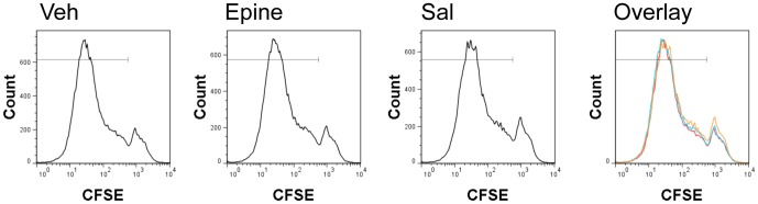 Incubation of vehicle (veh), epinephrine (epine), and salbutamol (sal) of immature Ovalbumin loaded BMDC in a T cell proliferation assay. Cells were incubated during LPS maturation o/n. The cells were washed and freshly isolated naïve <t>CD4</t> OT-II cells were stained with CFSE. Cells were co-cultured for 3 days and CFSE dilution was determined by flow cytometry. Overlays shown are representative of 3 independent experiments.