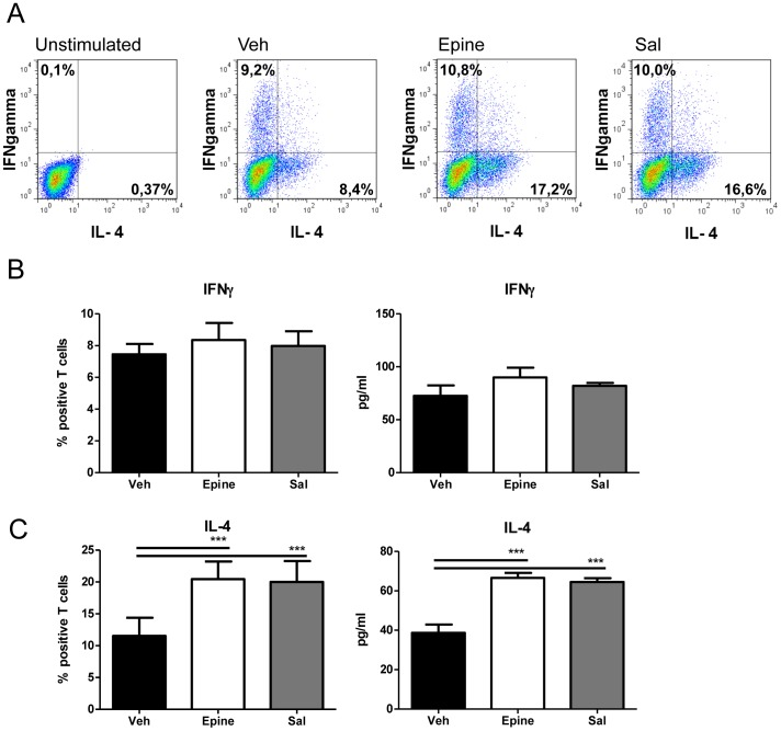 The effect of adrenergic agonists on BMDC potential to skew Tcells. Panel A. FACS plots of intracellular IFNγFand IL-4 in -OT-II T cells co-cultured with BMDC pre-treated with vehicle (Veh), epinephrine (Epine) or salbutamol (Sal) (all at 1 µM). Intracellular IFNγ FNr salarerer affected, while IL-4 production is increased after AR-βaffected, while IL-4 productB, histograms of % IFNγ positive T cells by FACS and by ELISA of day 4 of co-culture supernatant. Panel C, histograms of % IL-4 positive T cells by FACS and by ELISA. Data are expressed as % positive of CD4 gated T cells or as pg/ml and represent the mean ± SEM of three independent experiments representative of 4 experiments. ***p