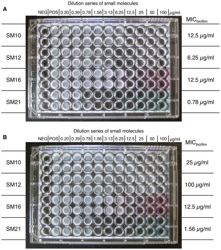 Anti-biofilm properties of SM10, SM12, SM16 and SM21. The small molecules were added to the C. albicans SC5314 biofilm (A) before and after the adhesion phase; (B) after the adhesion phase; and incubated in 37°C for 24 h. The MIC biofilm was determined as the concentration where the viability of the biofilm was reduced by 50% as compared with the positive control. SM21 had the lowest MIC biofilm among the four hits in both cases, indicating its potent anti-biofilm property. NEG, negative control; POS, positive control.