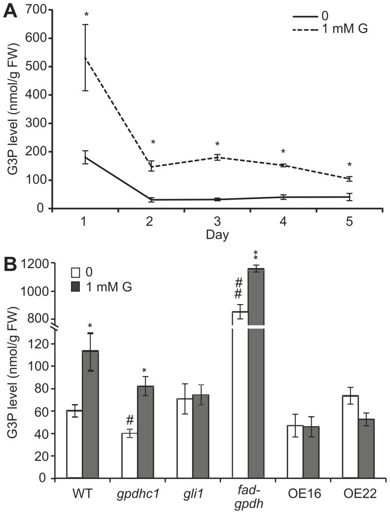 G3P levels in seedlings treated with glycerol (nmol g −1 FW). (A) Wild-type seedlings were grown on agar plates containing 0.5×Murashige and Skoog (MS) medium plus 1% (w/v) sucrose in the absence or presence of 1 mM glycerol from 1–5 days post-germination (dpg). The G3P levels of the seedlings were examined. The data are presented as the mean ± SE (n = 3–4). The asterisks indicate significant differences between the means as determined by Student's t-test (control versus 1 mM glycerol: *, p