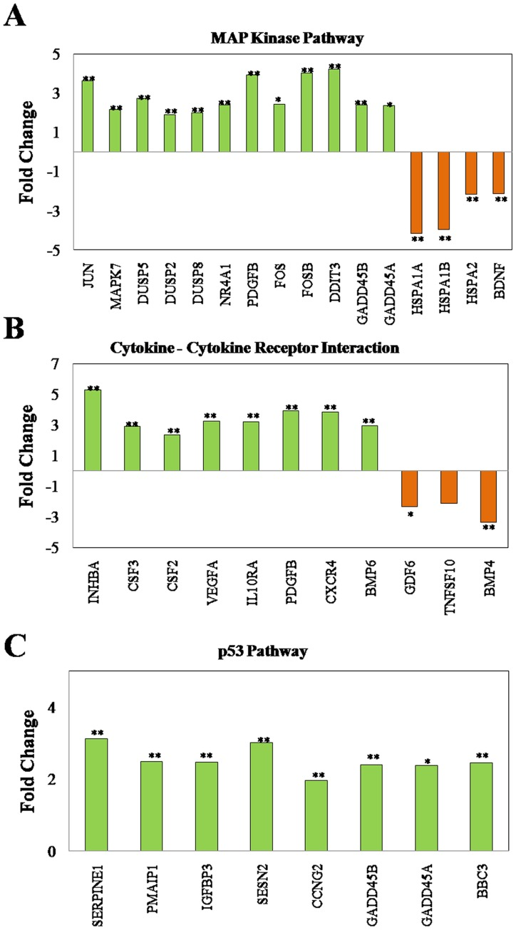"""Alterations in pathway based gene expression profile induced by embelin. A549 cells were treated with embelin (15 µM) for 4h. Microarray analysis was performed as described in """"Materials and Methods"""" section. Genes that showed differential regulation by at least 2-fold with p"""