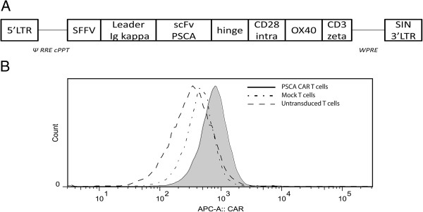 Lentivirus cassette and surface expression of PSCA-CAR on T cells. (A) The design of the PSCA-CAR-encoding lentiviral vector is shown. (B) Expression of the PSCA-CAR molecule on the surface CD3 + T cells after transduction with the lentiviral vector was analyzed by flow cytometry using Alexa-647 F(ab')2 Fragment of Goat Anti-Mouse IgG (H + L). The solid filled histogram represents PSCA-CAR expression of transduced T cells, complex histogram represents CAR expression on Mock lentivirus-transduced T cells and the dashed histogram represents untransduced control T cells.
