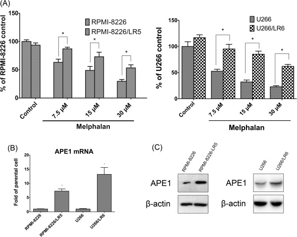 APE1 overexpression in melphalan-resistant MM cell lines RPMI-8226/LR5 and U266/LR6. (A) CCK-8 assay indicated that RPMI-8226/LR5 and U266/LR6 show more resistance to melphalan than their parental cell lines RPMI-8226 and U266. All cell lines were treated with three different doses of melphalan for 48 hours then cell viability was assayed using the CCK-8 assay. Results are shown as mean ± SD and were from three separate experiments. The significance was analyzed by Student t test. Stars (*) represent that the differences between RPMI-8226/LR5 and RPMI-8226 or between U266/LR6 and U266 are statistically significant ( p
