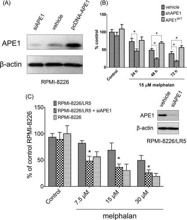 Manipulation of APE1 affects cell resistance to melphalan. (A) APE1 protein levels at 48 hours post transfection of siRNA or overexpression vector in RPMI-8226 cells were measured using Western blot. Transfection reagent only treated cells were included as a control. (B) Cell survival after 24, 48 and 72 hours post 15 μM melphalan treatment in all three groups was measured using CCK-8 assay. A star (*) represents that the difference between the shAPE1 transfected group and the vehicle alone group is statistically significant ( p