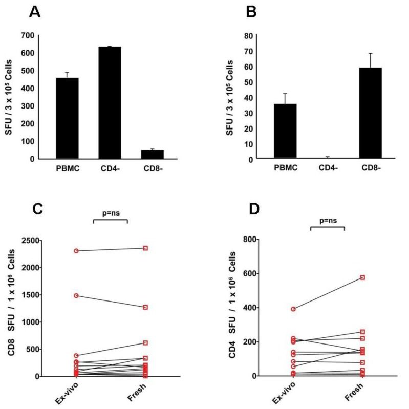 CD8 cells respond to CEF peptides ( A ), and CD4 cells to mumps antigen ( B ): these responses seen ex vivo are preserved after freeze thawing ( C D ). To determine T cell subsets responding to the CEF and mumps antigens, magnetic affinity bead-based separation was performed depleting more than 95% of CD4 or CD8 T cells, as specified. The PBMC and cell fractions were stimulated with CEF peptides ( A ) or mumps antigen ( B ). For each condition, triplicate wells were tested with the mean and standard deviation shown. The data shown are from one of two experiments performed with similar results. Freshly isolated, non-cryopreserved PBMC ( ex vivo ) and cryopreserved PBMC that were tested directly without resting following thawing (fresh) were tested in an IFN-γ ELISPOT assay against CEF peptides ( C ) and mumps antigen ( D ). Data points obtained for individual donors are connected with a line. Each data point represents the mean of triplicate antigen-stimulated wells. Standard deviations are not shown being between 5 and 20% of the mean. For each sample, fresh or freeze-thawed, the medium background was less than 10 spots per well. Nonparametric Wilcoxon signed-rank test was used to compare matched ex vivo vs . fresh responses with a p -value ≤ 0.05 being considered significant.