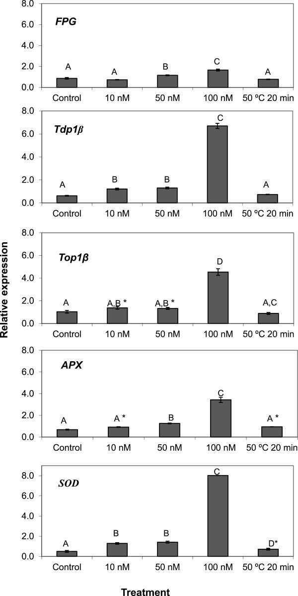 Expression of Tdp1 β, Top1 β, Fpg, SOD and APX genes in Medicago sativa cells treated with MPA-CdSe/ZnS QD. Expression of Tdp1 β, Top1 β, Fpg, SOD and APX genes on cell suspension cultures of M.sativa treated for 48 hours with 0, 10, 50 and 100 nM of MPA-CdSe/ZnS QD and at 50°C for 20 minutes. For each treatment, the data represents the mean values of three independent replications. One –way ANOVA P