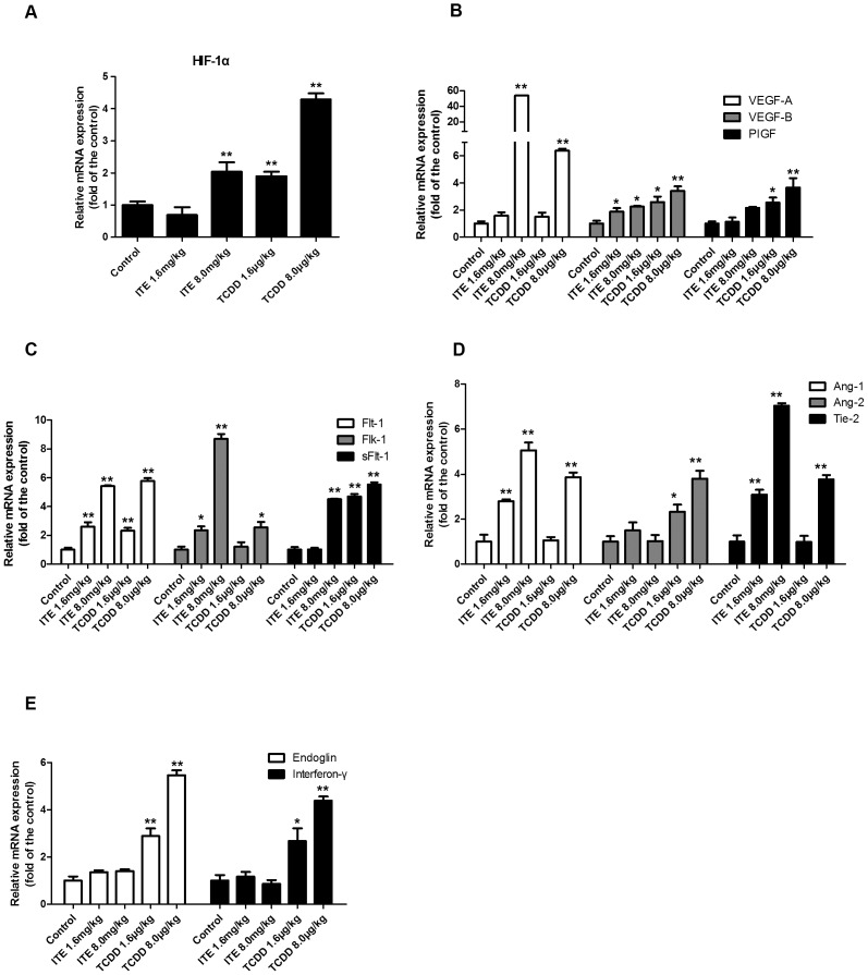 Effects of ITE and TCDD on mRNA expression of angiogenic-associated genes in placental tissues. The total RNA samples from placental tissues were subjected to real-time PCR. *Differ from the control ( p